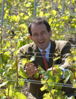 Bruno-Paillard-vineyard