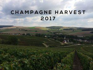 Champagne harvest 2017