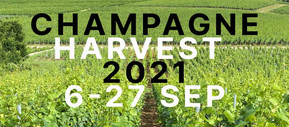 Champagne 2021 Harvest Has Begun and Will Last Until 27th September