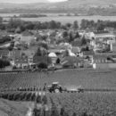 Champagne Deutz 2014 Harvest Report